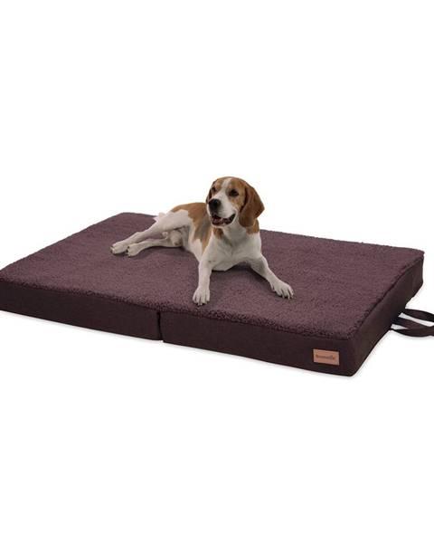 Brunolie Brunolie Paco, pelech pre psa, vankúš pre psa, možnosť prania, ortopedický, protišmykový, priedušný, skladacia pamäťová pena, veľkosť L (100 × 10 × 70 cm)